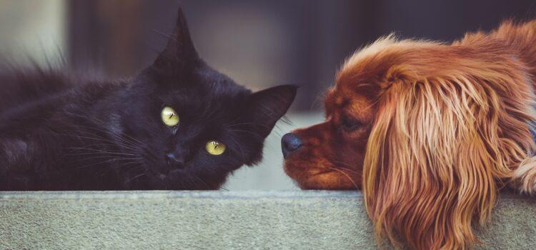 Für jede Tierart gibt es spezifische Krankheiten