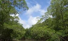 Amazonas und der Regenwald
