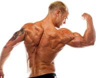 Muskel Eiweiß