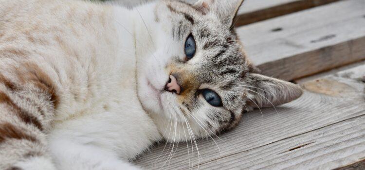 Was benötigt eine junge Katze für ein gesundes Wachstum?