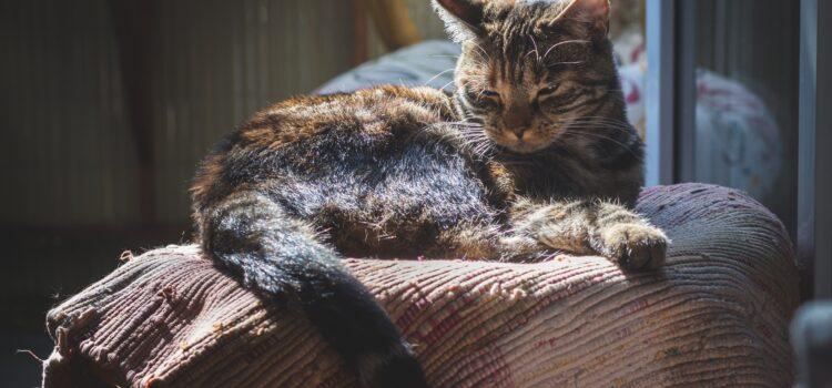 Katzen Nahrungsergänzungen von CAT FIT