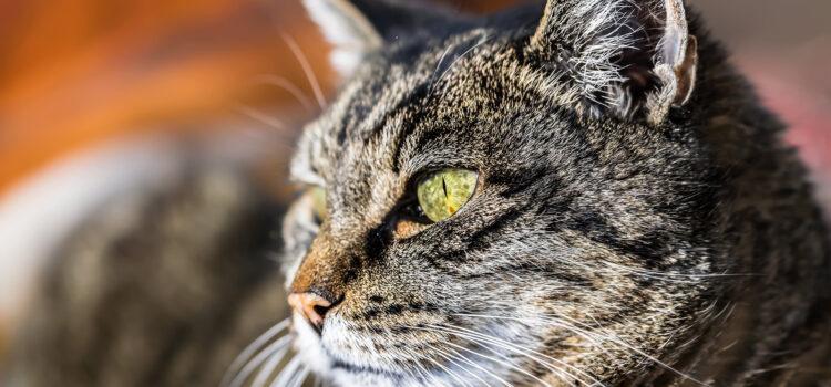 Katzensprache – Körpersprache von Katzen verstehen