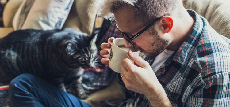 Die Wohnung auf eine Katze vorbereiten