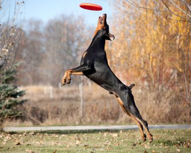Hundesport für einen gesunden Hund