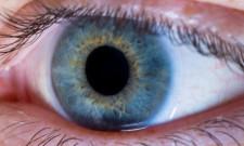 Auge Sehkraft