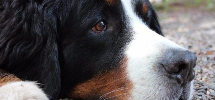 Frühjahrsmüdigkeit gilt auch für Hunde