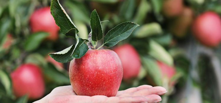 An apple a day – keeps the doctor away
