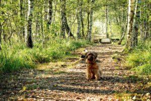 hund-birke