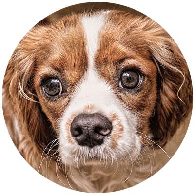 Hund Haut Fell Omega 3
