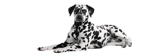Das Immunsystem unserer Hunde