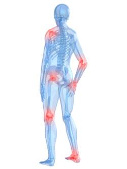 Knochen und Gelenke