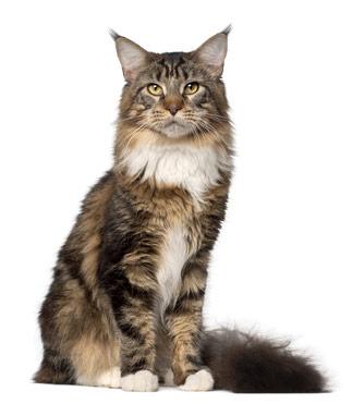 Katze mit schönem Fell dank CAT FIT by PreThis® SHINE