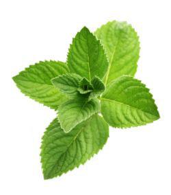 Heilkraeuter & Heilpflanzen