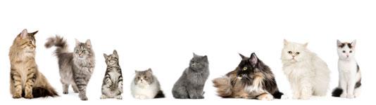 Gesundheit und Wohlbefinden für unsere Katzen