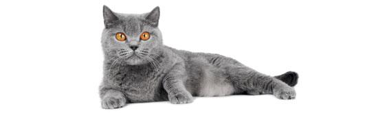 Das Immunsystem unserer Hauskatzen